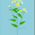 ~野の花を描こう~ ヒメジョオン【前編】